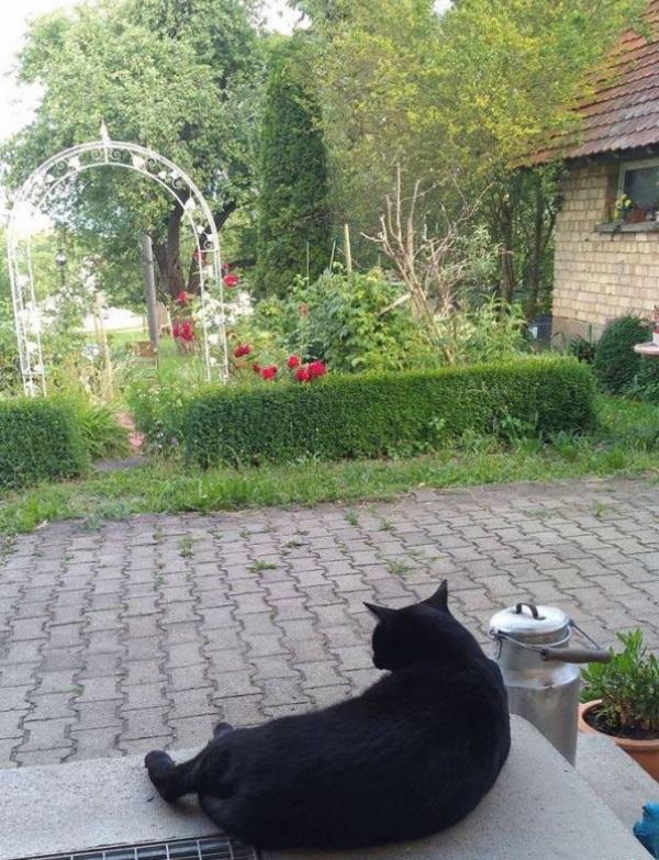 Katze Sibylle